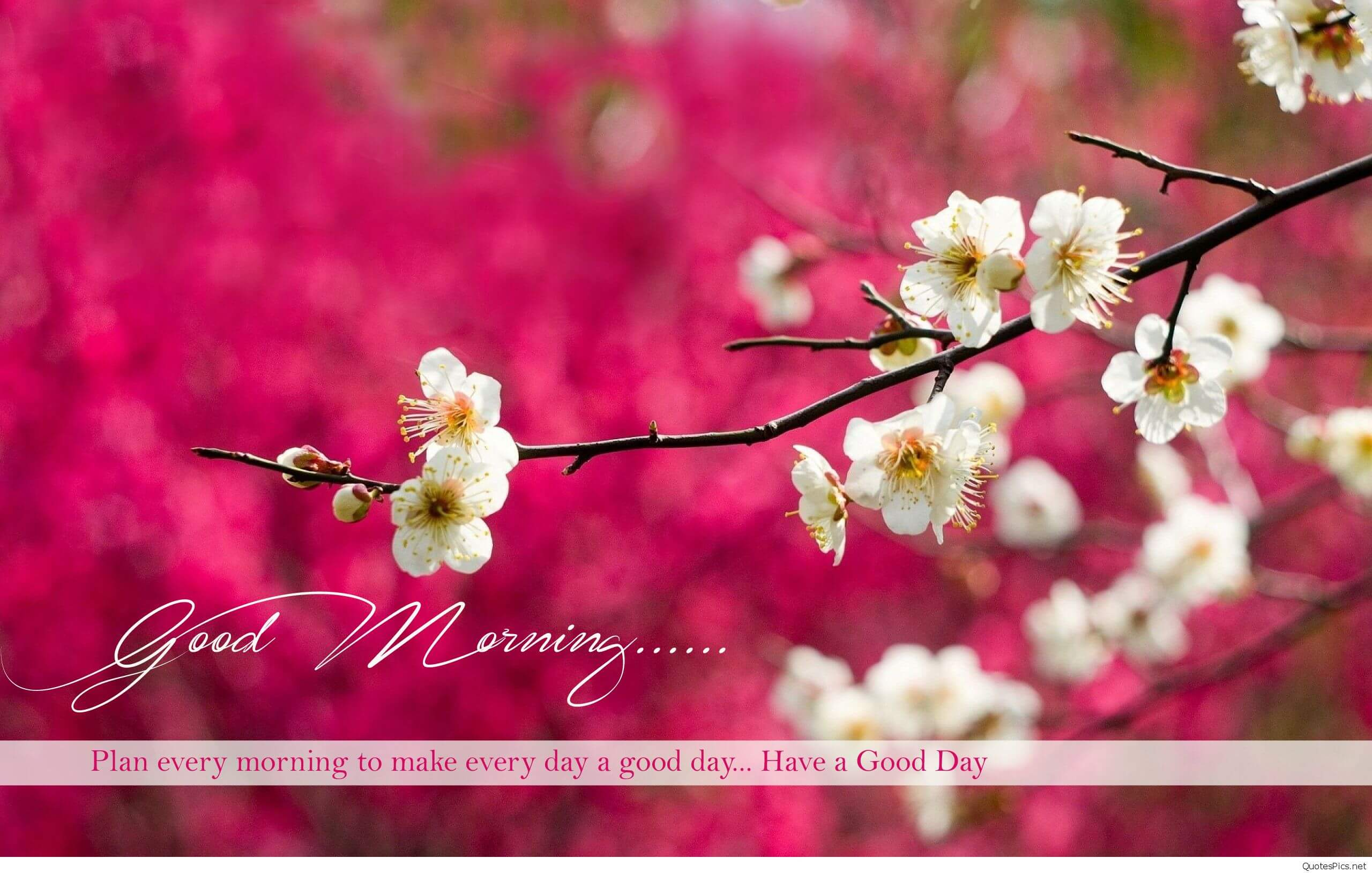 200 Good Morning Wishes Quotes With Images Fungistaaan